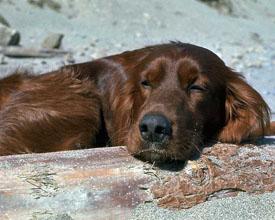 DogSleep.jpg