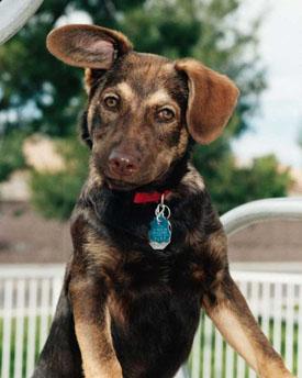 PuppyStand.jpg
